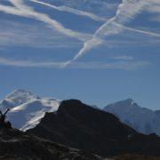 Faune tour du Mont-Blanc