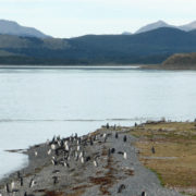 Patagonie et Terre de Feu