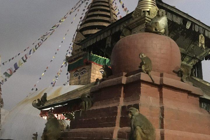 Stupa de Swayanbunath, la colline aux singes