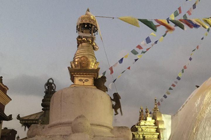 Stupa de Swayanbunath et ses singes